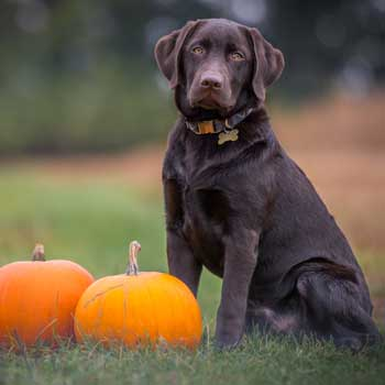 Halloween Tips For Pet Owner Coral Springs Animal Hospital